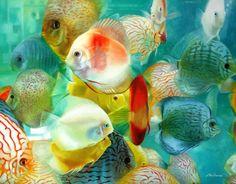 peixe urbano by fabianomillani