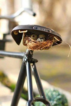 Bicycle bird nest.