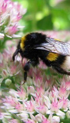 Bubble Bee On Flowers