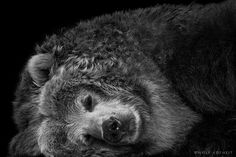 Black and White Photo Series of Animals