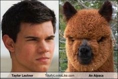 Look alikes celebrity funny moments