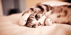 gatti coccolosi - Cerca con Google
