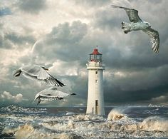 Gulls at Perch Rock by Tarrby (composite of multiple photos)