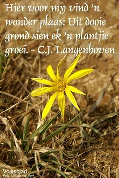 CJ Langenhoven Today Quotes, Wise Quotes, Afrikaans, Things To Think About, Words, Life, Blessings, Appreciation, Lyrics