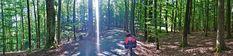 Juli_e_cycle en traversée de la forêt de Petersbach, Alsace-Boss #velo #bicyclette #veloelectrique #ebike #vae #tourdefrance #cyclingtour #cyclotourisme #RestartCycleTourism #lpetersbach #voieverte #foret #cyclingtour #juli_e_cycle #velafrica