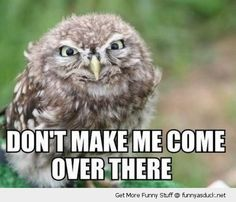 Over There | angry owl bird animal come over there evil funny pics pictures pic ...
