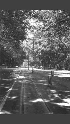 Bulevar Revolucije 1970's