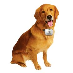National Geographic Pet's Eye View Camera | National Geographic Store