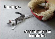 Funny cat - http://jokideo.com/funny-cat-32/