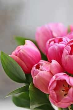 A Bunch for the Weekend-# 48-Pink Tulips and Ruscus-Ingrid Henningsson-Of Spring and Summer