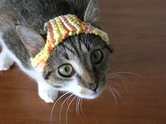 Ravelry: A Hat for A Cat by Sara Thomas