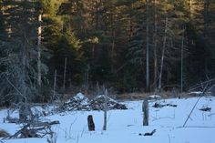 Beaver Lodges in January - Algonquin - Bob Theoret