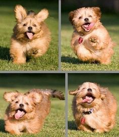 Perhaps the happiest dog in the world…