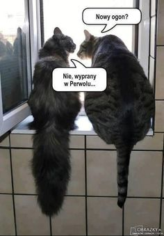 pl – Kot to nie zwierzę, to stan umysłu… Wtf Funny, Funny Cats, Funny Animals, Cute Animals, Hilarious, Funny Photos, Funny Images, Weekend Humor, Science Memes