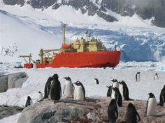 Gentoo penguins watch the Research Vessel LAURENCE M. GOULD near Petermann Island. The GOULD is one of two research vessels operated by the National Science Foundation.