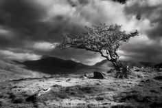 Tree in Snowdonia by Jem Salmon on 500px