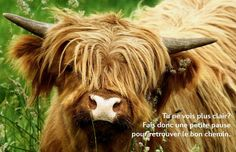 Pause Highland Cattle, Horses, Animals, Proverbs, Quotes, Animales, Animaux, Animal, Animais