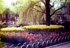 Tivoli Gardens in Copenhagen. I went once but it was so great I'd go back in a second! #ridecolorfully