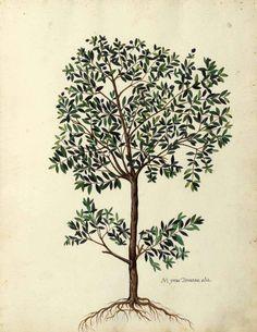 greek olive engraving - Поиск в Google