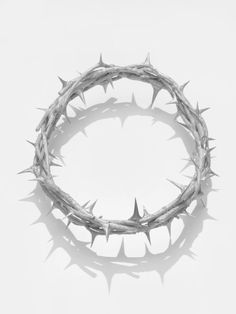 48 Best Crown Of Thorns Images On Pinterest