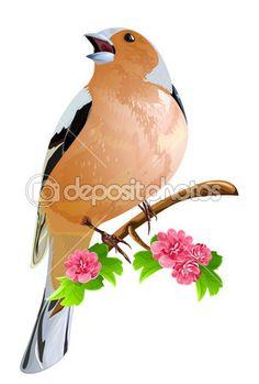 Pájaro en la rama de floración — Vector de stock #33426059