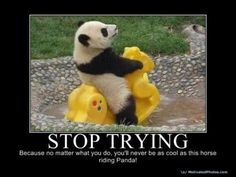 #wise Stop trying because no matter what you do, you will never be as cool as this Horse-riding Panda!!