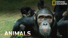 National Geographic Animals - Episodes