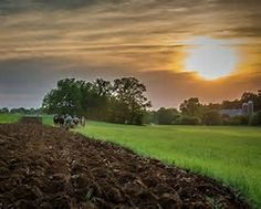 Image result for Amish Plowing Sunset