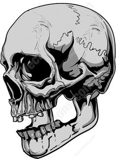 side view of gray human skull cartoon clipart vector toons