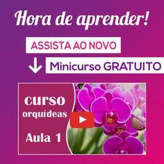 Descubra o segredo para ter lindas orquídeas #orquidea #flores #plantas #jardins #jardinagem #lindojardin #casa