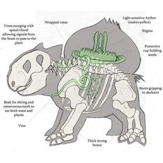artist request bone bulbasaur diagram english nintendo pokemon science skeleton solo vines x-ray found on Polyvore