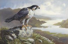 Wildlife Paintings, Wildlife Art, Animal Paintings, Andrew Wyeth, Akira, Hawk Tattoo, Alex Colville, Peregrine Falcon, Audrey Kawasaki