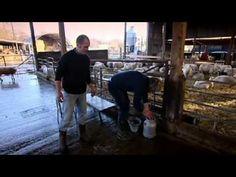 Making Halloumi - Gordon Ramsay