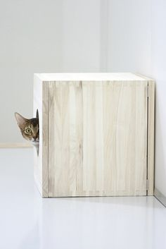 """* * """" Me haz a wall arounds me dat yoo  can'ts even see. It takes a littles time to gets next to me."""" ---------------------------------------------------- [Paul Simon - Tenderness"""
