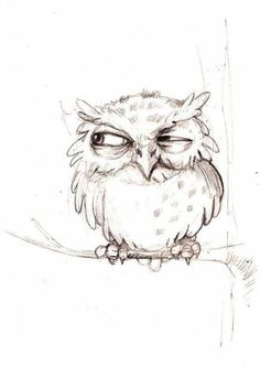 Marvelous Drawing Animals In The Zoo Ideas. Inconceivable Drawing Animals In The Zoo Ideas. Bird Drawings, Cute Drawings, Animal Drawings, Pencil Drawings, Drawing Owls, Drawing Animals, Owl Tattoo Drawings, Owl Sketch, Drawing Sketches