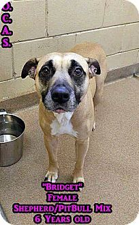 8/17/16 STILL AVAILABLE! Look at that sad face! Surrendered because her owner…