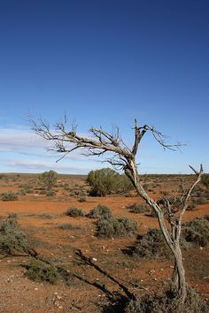Outback NSW | by rogkmyers Country Life, Country Roads, Max Movie, Mad Max, Australia, Country Living, Res Life