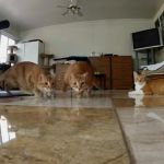 Cats Chasing Lasers in Dramatic Slow Motion, Caught With a GoPro