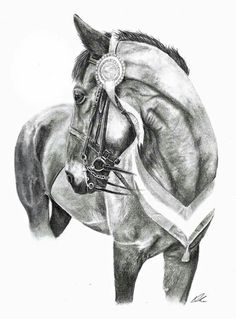 Graphite pencils, this original piece still sits at home with me! If you are interested in the original, or to commission your own personal piece of art of your four legged friend, please contact abigail.rose06@gmail.com or visit www.facebook.com/abigailrose.equineart