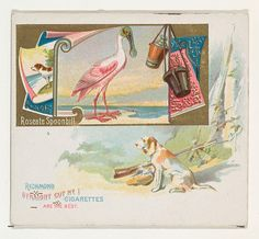 Roseate Spoonbill, from the Game Birds series (N40) for Allen & Ginter Cigarettes