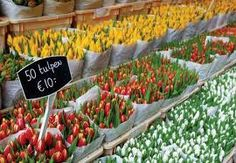 - FLOWER MARKETS  NETHERLANDS -