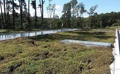 Projeto de telhado verde em condomínio de Atibaia (SP), feito pela paisagista Rita Barreto (Foto: Rita Barreto)