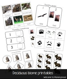 Forest animal toddler activities & Free Printables by Welcome to Mommyhood #toddleractivities #montessori