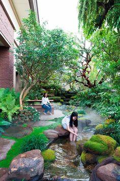 Modern Zen & Tropical Rainforest สัมผัสที่แตกต่างด้วยอรรถรสที่กลมกล่อม - บ้านและสวน Pond Landscaping, Ponds Backyard, Tropical Landscaping, Modern Landscaping, Tropical Garden, Backyard Patio, Landscaping Design, Florida Landscaping, Backyard Privacy