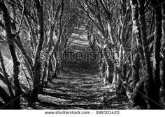 Like the archway picture of previous pins, this too tries to create a similar illusion but with darker tones. Instead of a white backdrop, we are treated to a dim landscape in twilight. The shadows are stretched across the forest floor and the sky is darker. Thus the parallel rows become sinister and the narrow opening is a widening black hole.