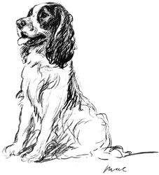 Consider Adopting an   English Springer Spaniel!