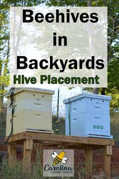 How to find the best location for your beehive? Hive placement plays an important role in the health of your bee colony. Bee Hive Plans, Bee Swarm, Raising Bees, Bee Skep, Bee Boxes, Backyard Beekeeping, Bee Friendly, Bee Happy, Busy Bee