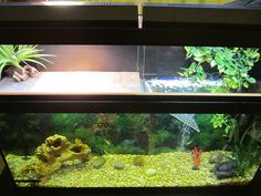 IMG_0027 by Grayfamilia, via Flickr Aquatic Turtle Habitat, Aquatic Turtle Tank, Turtle Aquarium, Aquatic Turtles, Turtle Pond, Red Ear Turtle, Tortoise Turtle, Turtle Tank Setup, Turtle Tanks