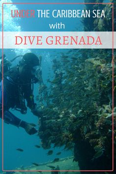 Under The Caribbean Sea With Dive Grenada