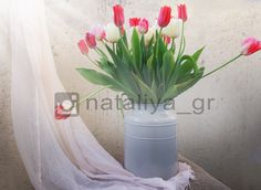 Тюльпаны||Tulips on my balcony||instagram photography ideas inspiration